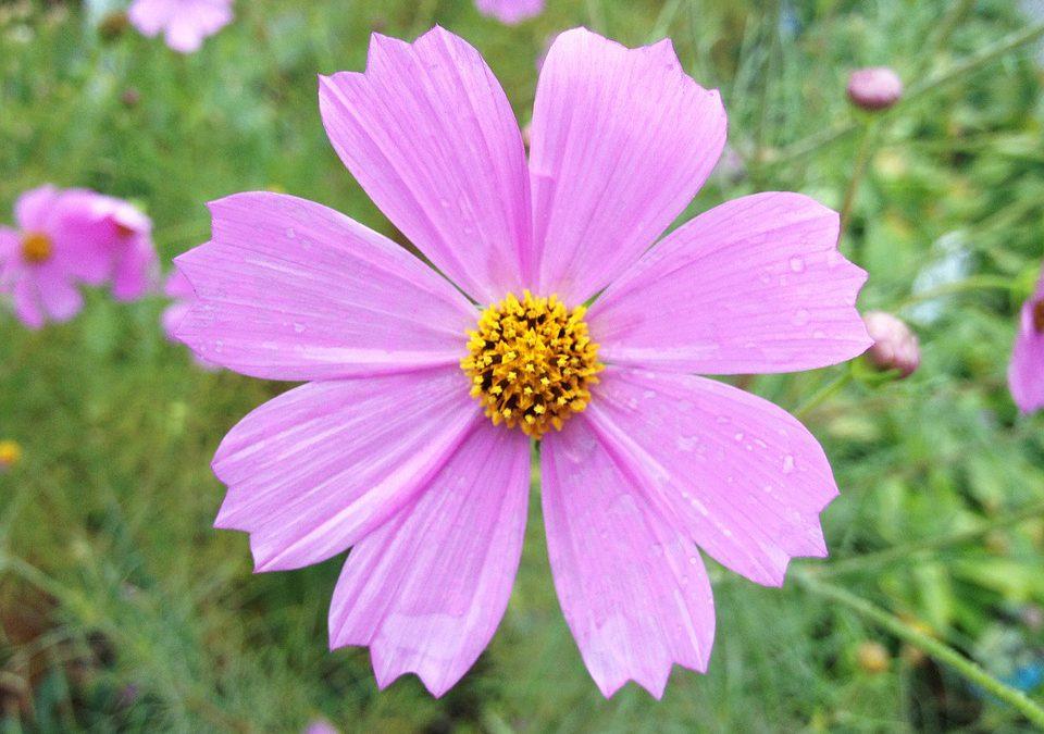 10 cách cắm hoa đẹp bạn không ngờ tới