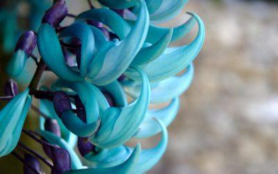 Những loài hoa đẹp nhất hành tinh